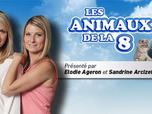 Les animaux de la 8
